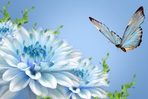 Butterflies_wallpapers_189