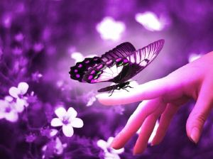 purple-butterfly-on-hand